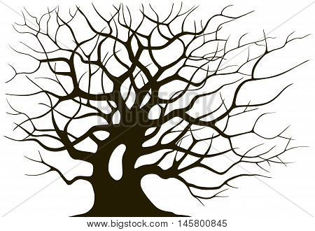 Silhouette branching of an old tree on a light background