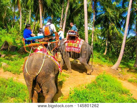 Koh Samui, Thailand - June 21, 2008: Tourists riding on elephants in the Thailand