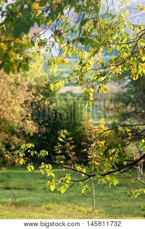 View of the lawn through the branches of trees in autumn