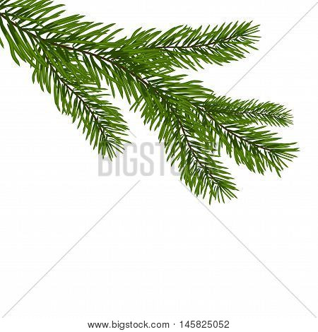 Green, realistic branch of fir. Fir branches. Isolated on white. Christmas vector illustration
