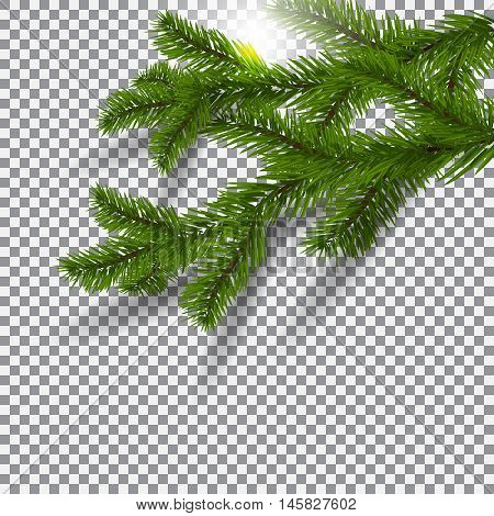 Two green, realistic shadows with spruce branches. Christmas Spruce branches. On a plaid background with sun flare.