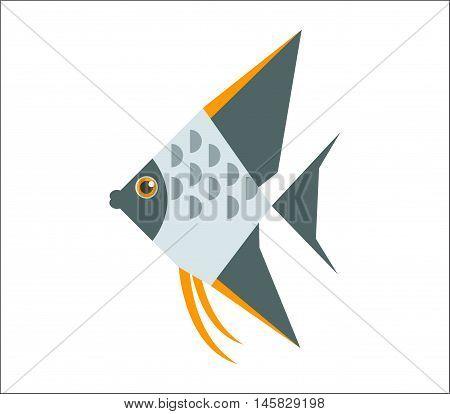 Aquarium fish. Angelfish flat illustration. The inhabitants of marine reef aquariums and ponds