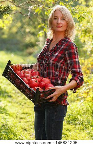 Woman Holding A Tomato Box