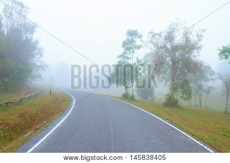 An empty road in the misty forest.