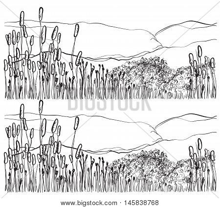 Sketch reed isolated on white background. Landscape sketch