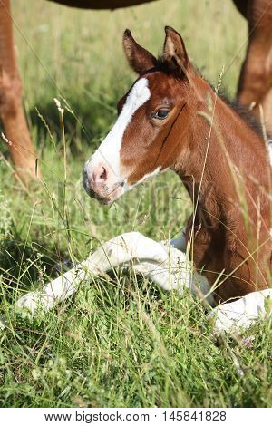 Amazing Foal Looking At You On Pasturage