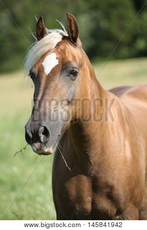 Nice Palomino On Pasturage