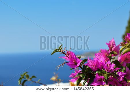 Typical Greek colorful garden flowers, bougainvilleas over the ocean water