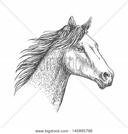 Horse with mane waving in wind. Proud and free mustang stallion pencil sketch strokes portrait
