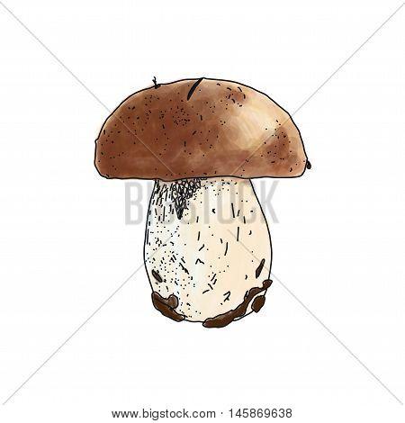Vector illustration of Boletus edulis mushroom on white