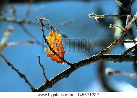 una foglia appesa su ramo in autunno