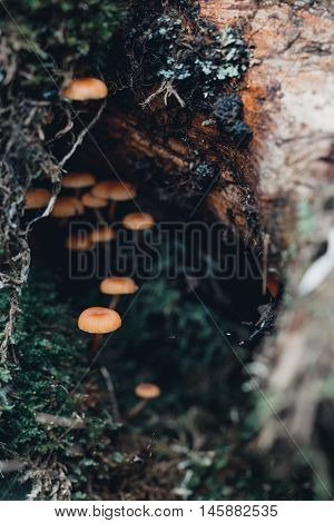 Orange Toadstool In Nature