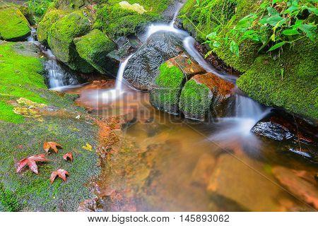 Waterfalls and maple leaf at Phu Soi Dao Uttaradit, Thailand.