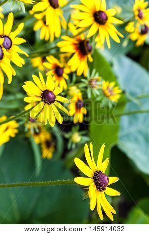Yellow flowers in the green grass garden.