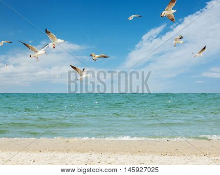 Seagull birds white group flying  fishing above blue sea and sand beach