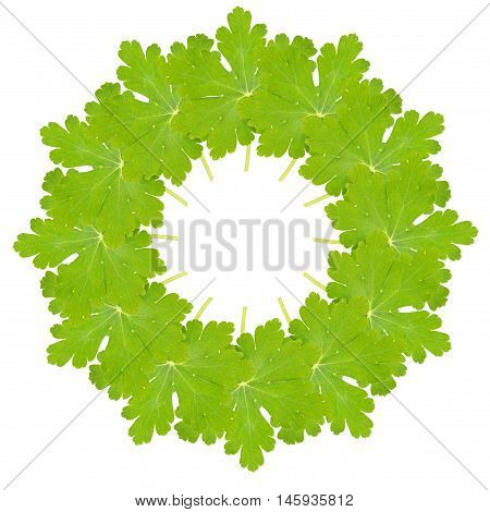 Geranium sanguineum leaves arranged in a circular collage isolated on white.