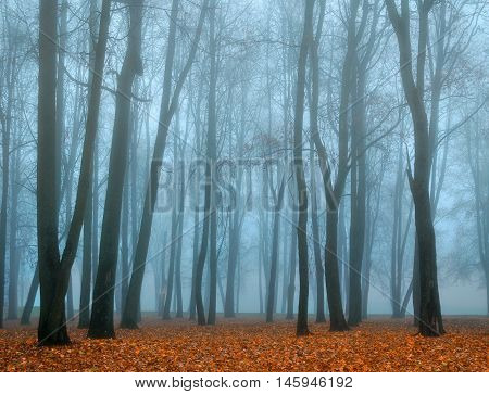 Autumn nature. Picturesque autumn landscape. Autumn foggy park nature in autumn fog. Autumn deserted park in foggy autumn weather -colored autumn landscape. Autumn bare trees in the park in dense fog