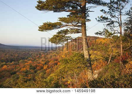 Pine Trees Overlooking Bluffs and a Valley with Autumn Colors in the Porcupine Mountains of Michigan