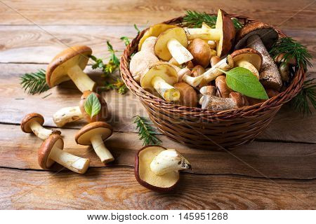 Forest picking mushrooms on the rustic wooden background. Fresh raw mushrooms on the table.