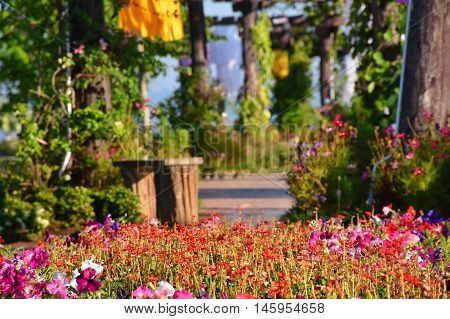 Flower in garden with beuatiful nature walkway