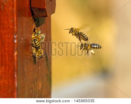 Bee Colony Entrance
