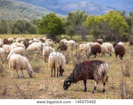 Organic Farm In Greece