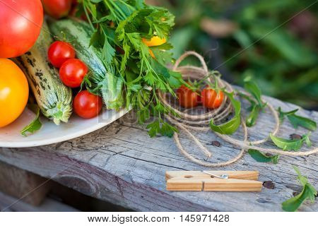 harvest of vegetables and greens in a garden on wood background