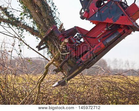 Tree Cutting Crane In Action