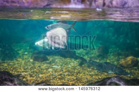 Abstract blur of Fishes in green water