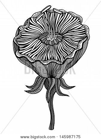 Flower on a white background in a black lines. Doodle floral image for coloring book and designs ideas