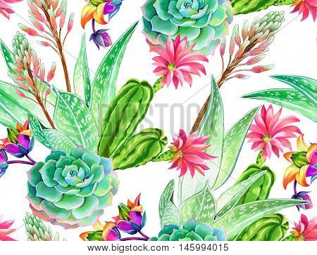 seamless pattern with succulents and cactuses. Blossoming succulents design in watercolor illustration. succulents bouquets for textile, fashion, interior. bright botanical elements on white
