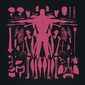 Human anatomy flat lay illustration of body parts, exploded view, deconstructed, dissected. poster