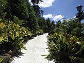 caminho da natureza, estrada em parque de Gramado - RS poster