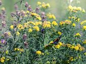 Butterfly in a field of wildflowers in Cupid's Haven, Newfoundland and Labrador poster