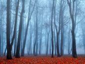 Autumn nature. Picturesque autumn landscape. Autumn foggy park nature in autumn fog. Autumn deserted park in foggy autumn weather -colored autumn landscape. Autumn bare trees in the park in dense fog poster