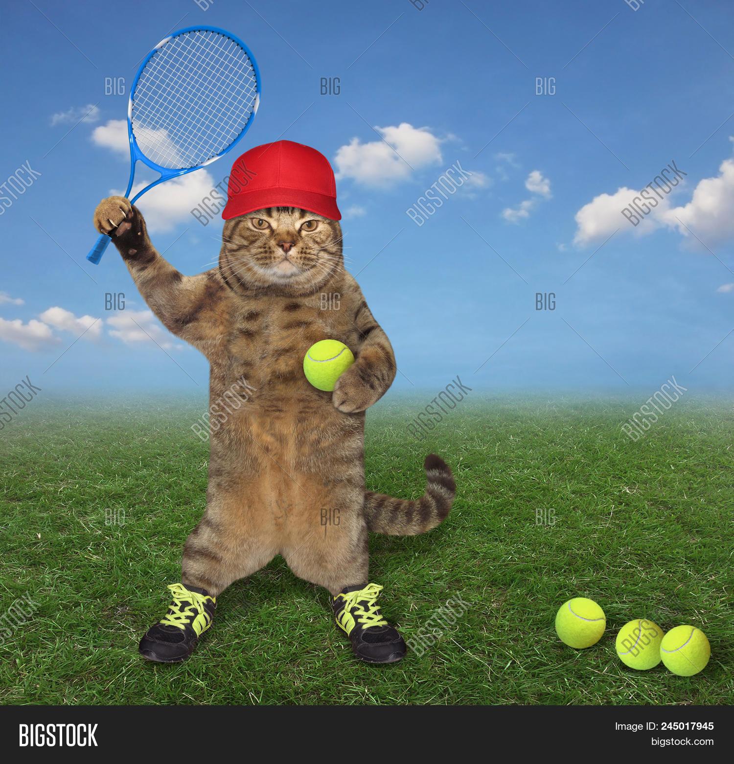 Cat Red Cap Sneakers Image \u0026 Photo