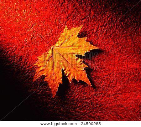 one single dried maple leaf