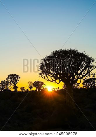 Golden Hues As Sun Rises Over Rugged Terrain Of Quiver Tree Forest, Namibia