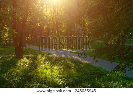 Summer landscape - summer park alley at sunset and unidentified girl riding the bicycle, concept of summer activities. Summer sunny landscape scene. Summer colorful nature