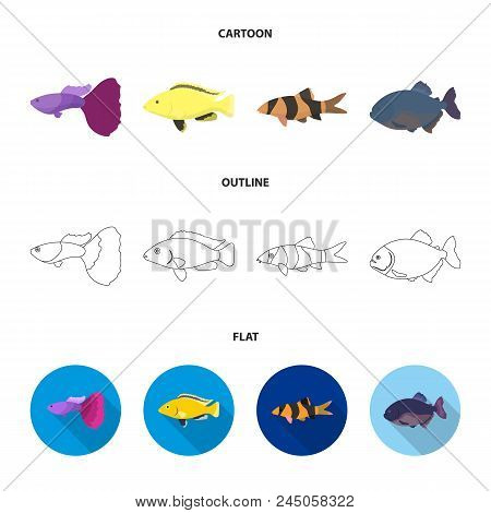 Botia, Clown, Piranha, Cichlid, Hummingbird, Guppy, Fish Set Collection Icons In Cartoon, Outline, F