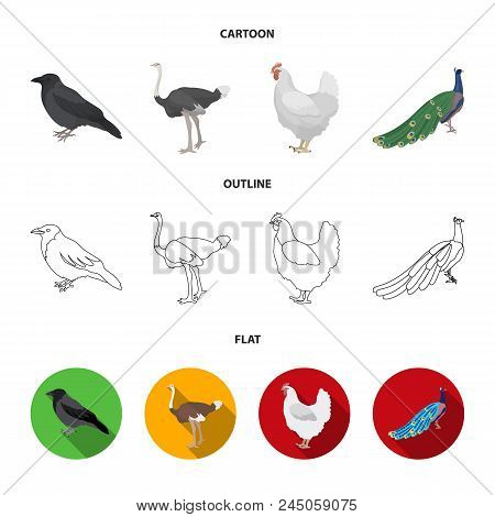 Crow, Ostrich, Chicken, Peacock. Birds Set Collection Icons In Cartoon, Outline, Flat Style Vector S