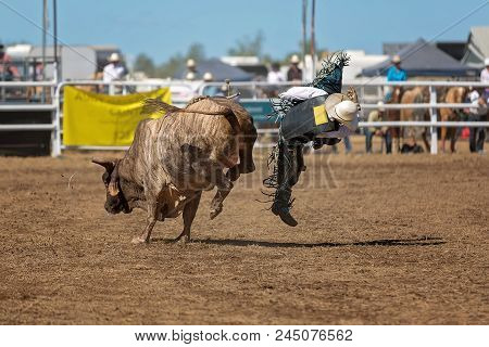 A Cowboy Falls Off A Bull While Competing In A Country Rodeo For Bullriding