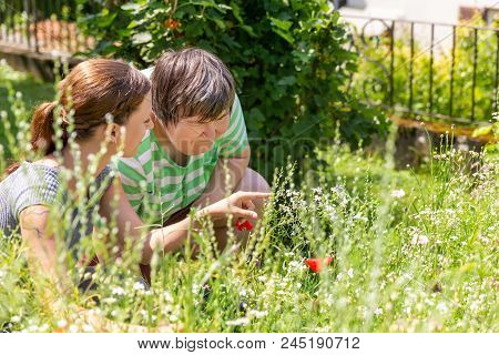 Woman Is Showing An Mental Disabled Woman A Flower In A Flower Meadow