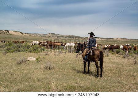 Cowboy Wrangler Wrangler Riding Buckskin Horse Watching Over Horse Herd With Rope Black Cowboy Hat B