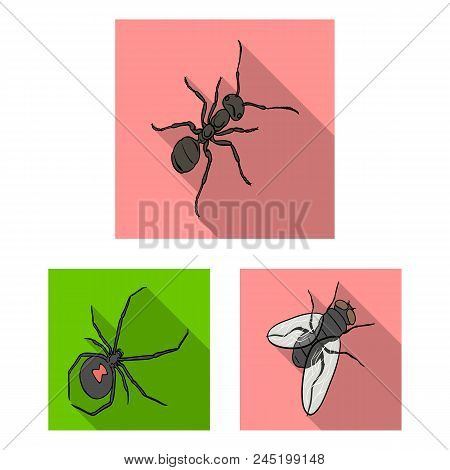 Different Kinds Of Insects Flat Icons In Set Collection For Design. Insect Arthropod Vector Isometri