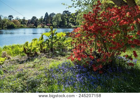 A Gorgeous Mix Of Purple And Red Flowers To The Right Of A Stunning Lake.