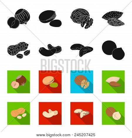 Peanuts, Cashews, Brazil Nuts, Macadamia.different Kinds Of Nuts Set Collection Icons In Black, Flet