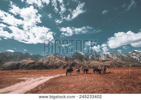 Wide-angle Shot Of Mountain Scenery With Six Grazing Loaded Horses Without Equestrians On Them; With