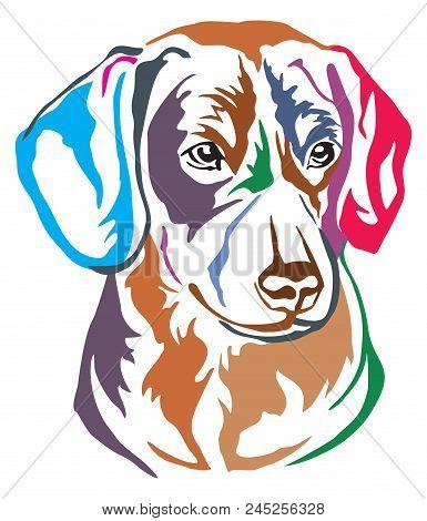 Colorful Decorative Portrait In Profile Of Dog Entlebucher Mountain Dog, Vector Illustration In Diff