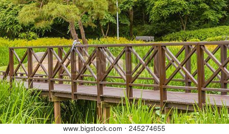 Two Azure Winged Magpie Perched On A Wooden Footbridge In A Public Park Surrounded By Lush Vegetatio
